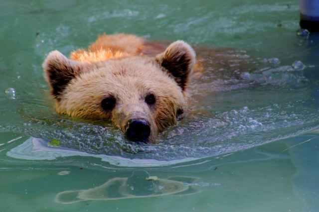 adorable animal animal photography bear